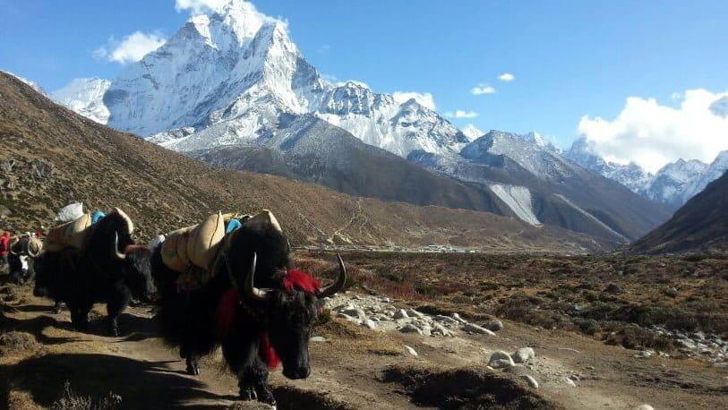Everest Anakamp Turu 1
